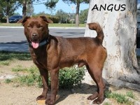 Angus Type: Patterdale Terrier Size: 15 lbs
