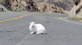 rabbit road sm 268x150